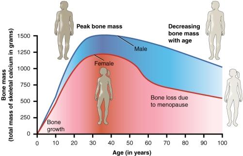 Age_and_Bone_Mass